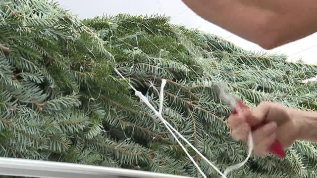 new orleans, u.s. - families picking up christmas trees at christmas tree lot on monday, november 30, 2020. - 梱包機点の映像素材/bロール