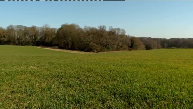 stockvideo's en b-roll-footage met new planning rules set out by government england berkshire newbury sandleford park ext gorse bush in bloom pan track in field bird flying off grass... - newbury engeland