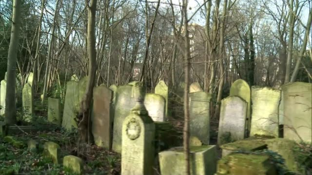 new projects aims to encourage visitors to cemeteries england london tower hamlets cemetery park headstones in cemetery covered in leaves back view... - temperate flower stock videos and b-roll footage