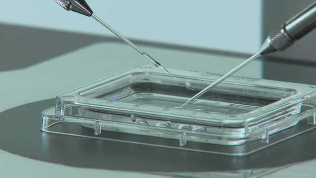 a new significantly cheaper treatment for ivf is being offered in the uk for the first timethe socalled shoebox ivf allows eggs to be fertilised in a... - servizio sanitario nazionale britannico video stock e b–roll