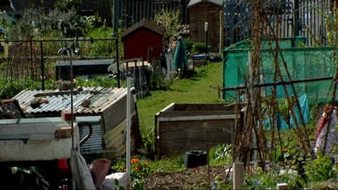 new study finds bees can thrive in urban habitats; t11041234 / tx 11.4.2012 london: peckham: general view of allotments r02081309 / 2.8.2013 london:... - peckham stock videos & royalty-free footage