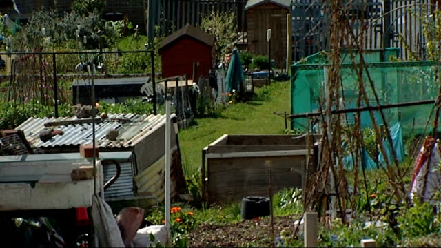 vídeos de stock e filmes b-roll de new study finds bees can thrive in urban habitats; t11041234 / tx 11.4.2012 london: peckham: general view of allotments r02081309 / 2.8.2013 london:... - peckham