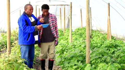 vídeos y material grabado en eventos de stock de nueva tecnología orgánica los agricultores africanos - cocina estructura de edificio