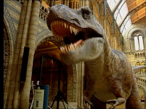 new theory for tyrannosaurus rex lib london natural history museum animatronic model of tyrannosaurus rex - dinosaur stock videos and b-roll footage