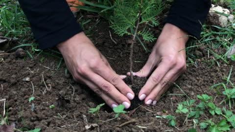 new tree - pine tree stock videos & royalty-free footage