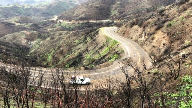 New vegetation sprouts in a Woolsey Fire burn area in the Santa Monica Mountains on February 27 2019 near Malibu California Significant winter...
