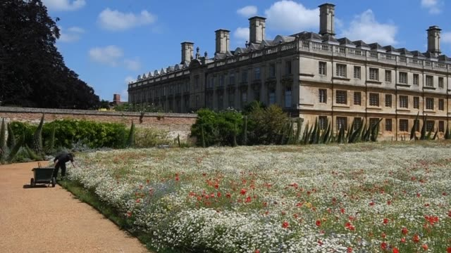 new wildflower meadow at king's college in cambridge. featuring harebells, buttercups, poppies and cornflowers, the aim is to create a... - meadow stock videos & royalty-free footage