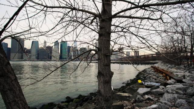 new york skyline - bare tree stock videos & royalty-free footage