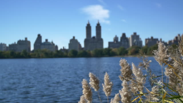 new york slowmotion central park - central park reservoir stock videos and b-roll footage