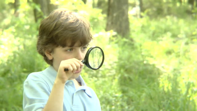 ms, usa, new york state, bedford hills, boy (8-9 years) looking through magnifying glass in forest - 8 9 years stock videos & royalty-free footage