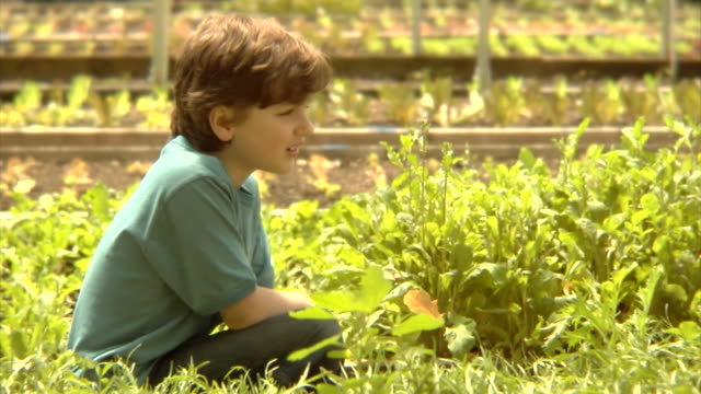 ms, pan, usa, new york state, bedford hills, boy (8-9 years) with two girls (6-9 years) sitting in vegetable garden - 8 9 years stock videos & royalty-free footage