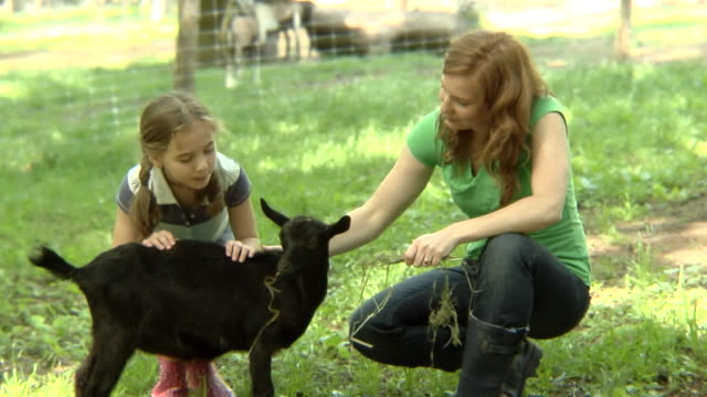 ms, usa, new york state, bedford hills, mother and daughter (6-7 years) feeding goat on paddock - 6 7 years stock videos & royalty-free footage
