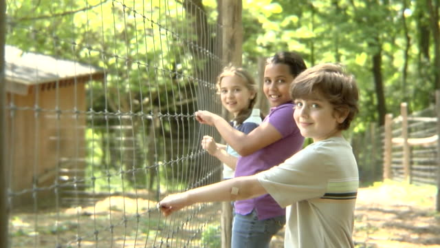 stockvideo's en b-roll-footage met ms, usa, new york state, bedford hills, three children (6-9 years) standing at wire fence, portrait - 6 7 years