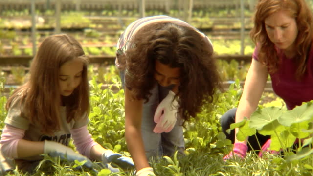MS, USA, New York State, Bedford Hills, woman and two girls (6-9 years) gardening in greenhouse