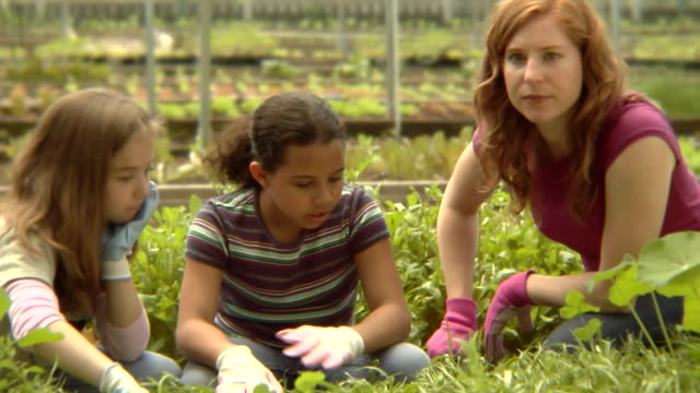 stockvideo's en b-roll-footage met ms, usa, new york state, bedford hills, woman and two girls (6-9 years) gardening in greenhouse - 6 7 years