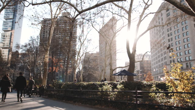 new york's flatiron building on a warm autumn afternoon. - bare tree stock videos & royalty-free footage