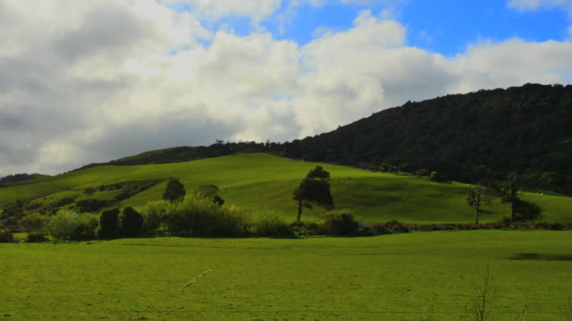 New Zealand Catlins grassy hill