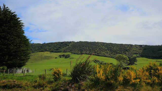 New Zealand Catlins hills and pasture