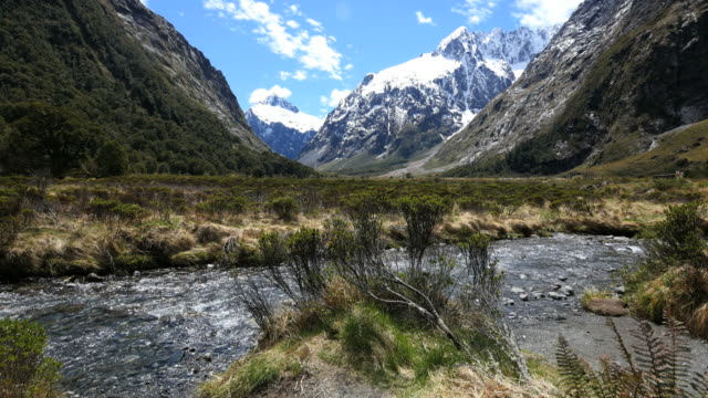 New Zealand Fiordland river flows past bush