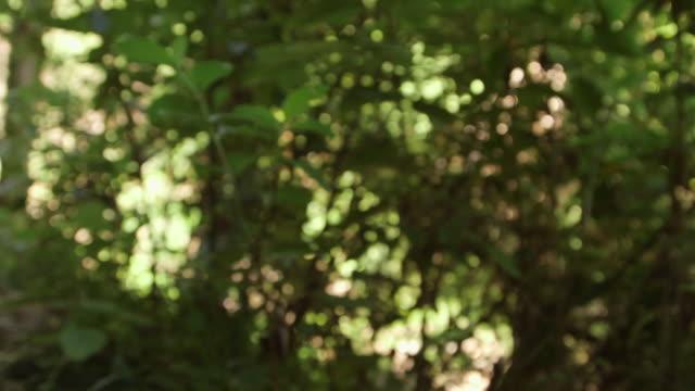 New Zealand foliage POV walk