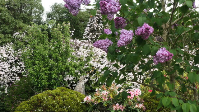new zealand lilacs and garden flowers - springtime stock videos & royalty-free footage