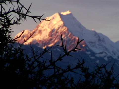 stockvideo's en b-roll-footage met ms, r/f, new zealand, mount cook at dusk, bare tree branches in foreground - bare tree