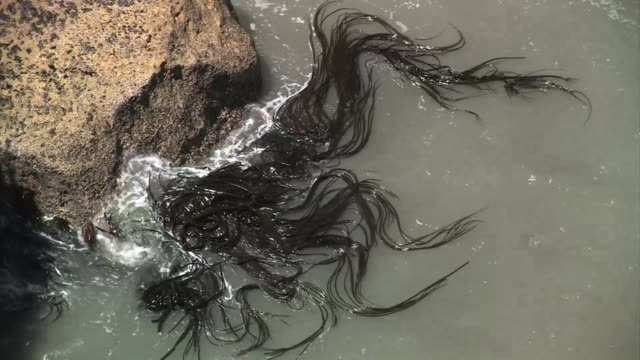 new zealand, paparoa national park. ocean water flowing onto rocks with seaweed attached. - seaweed stock videos & royalty-free footage