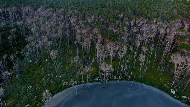 ニュージーランド パイン森林森林。 - オークランド点の映像素材/bロール