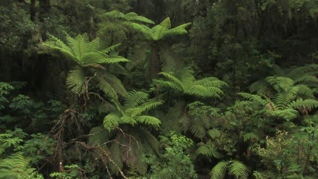 new zealand. rain falling on ferns in a misty jungle in southwest new zealand. - fern stock videos & royalty-free footage