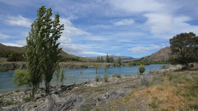 new zealand river with poplars - new zealand点の映像素材/bロール