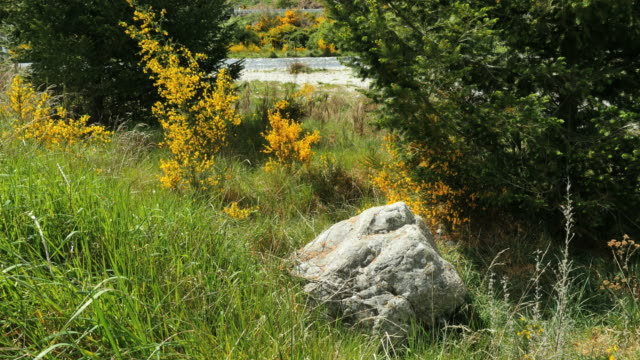 new zealand scotch broom and boulder - boulder rock bildbanksvideor och videomaterial från bakom kulisserna