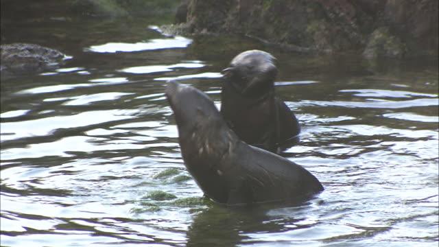 New Zealand; Seals