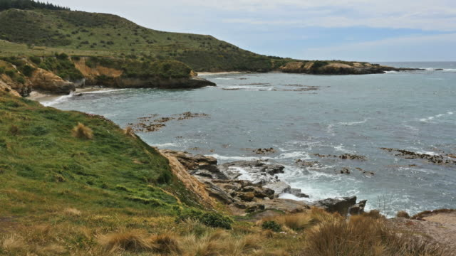 new zealand shag point view of coast - 丘点の映像素材/bロール