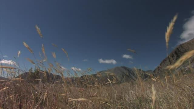 vídeos y material grabado en eventos de stock de new zealand, south island. a flock of merino sheep. - oveja merina