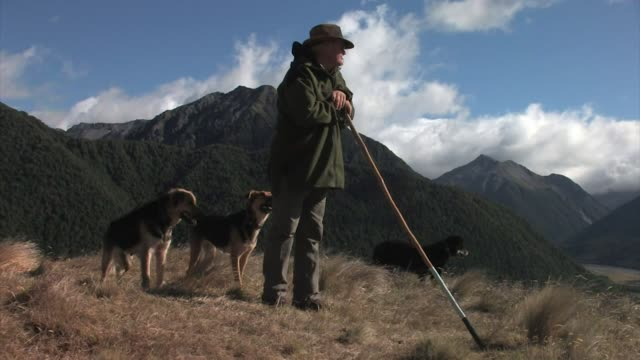 new zealand, south island. a shepherd and his dogs overlooking the mountainous landscape. editorial use only. - shepherd stock videos & royalty-free footage