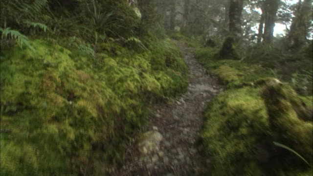 new zealand; southern alps; temperate rainforest - temperate rainforest stock videos & royalty-free footage
