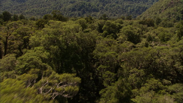 new zealand; southern alps - temperate rainforest stock videos & royalty-free footage