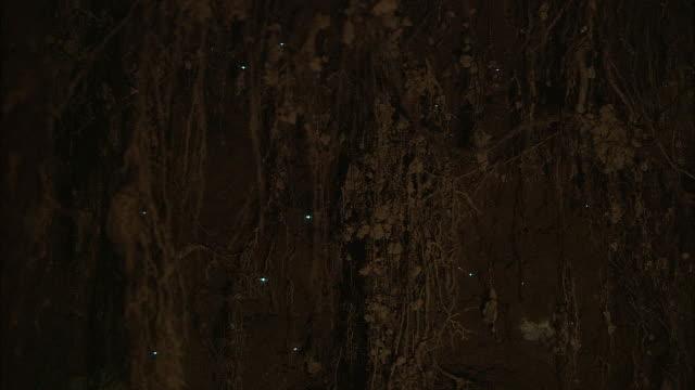 new zealand; southern alps - 蛍点の映像素材/bロール