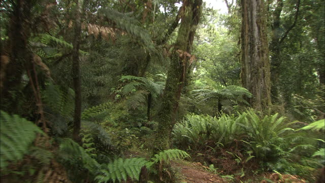 new zealand; temperate rainforest - temperate rainforest stock videos & royalty-free footage