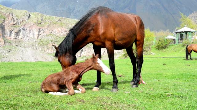 newborn foal - human reproductive organ stock videos & royalty-free footage
