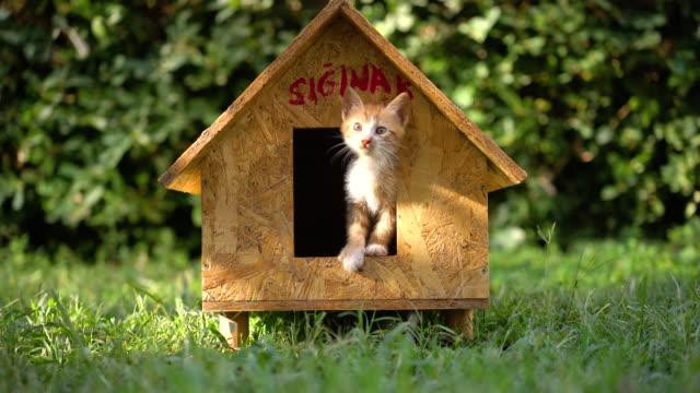 newborn kitten in wooden cat house - ozgurdonmaz stock videos and b-roll footage