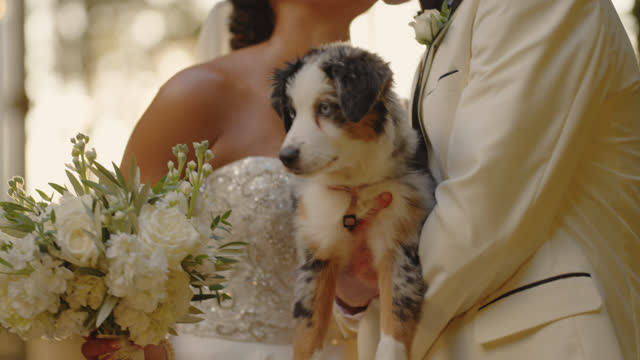 slo mo cu newlyweds kiss while holding their cute puppy - bunch stock videos & royalty-free footage