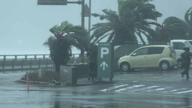 vidéos et rushes de news crew lashed by strong wind and torrential rain from typhoon cimaron in japan - reporter de télévision