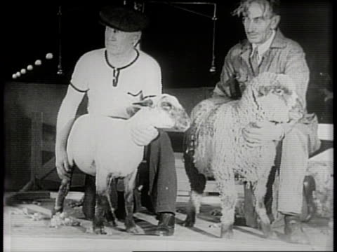 vídeos y material grabado en eventos de stock de newsreel / narrated / paramount news / title card reads: nation's 4-footed best! / international livestock show starts in chicago, illinois in 1940 /... - escarapela