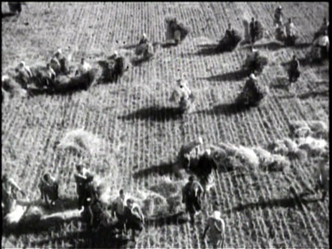 Newsreel / No Audio / Collective farming in Russia / Tractors Plow Large Field / Wind Blows Through Wheat Field / Thrashers Cut Grain / Workers Bail...