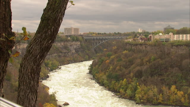 Niagara River white water rapids bend landscape mossy tree trunk FG Whirlpool Rapids Bridge urban buildings on each side of river BG Slight ZI WS...