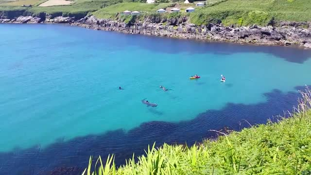 niamh ní dhrisceoil is well used to seeing all types of sea-life in her job as a skipper of the cape clear ferry in county cork, ireland. in the... - sea life stock videos & royalty-free footage