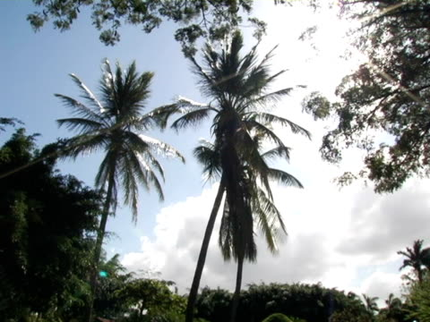 ms, la, nicaragua, managua, palm trees in wind against sunny sky - fan palm tree stock videos & royalty-free footage