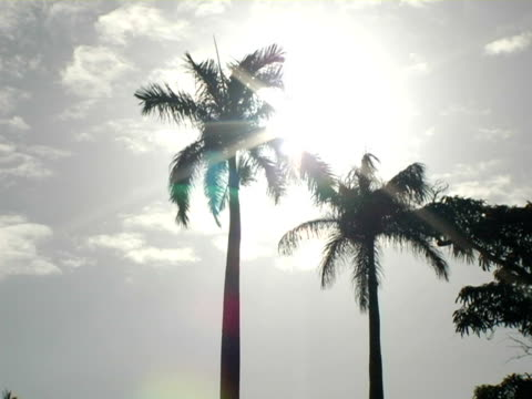 ms, la, nicaragua, managua, silhouettes of palm trees against sunny sky - fan palm tree stock videos & royalty-free footage