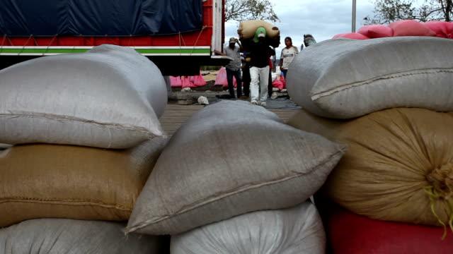 stockvideo's en b-roll-footage met nicaragua, matagalpa, processing arabian coffee (species coffea arabica) - zak tas
